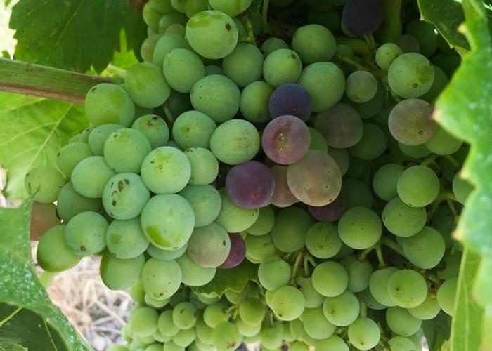 Le Domaine du Colibri propose la vente de vin Mont Ventoux près de Carpentras