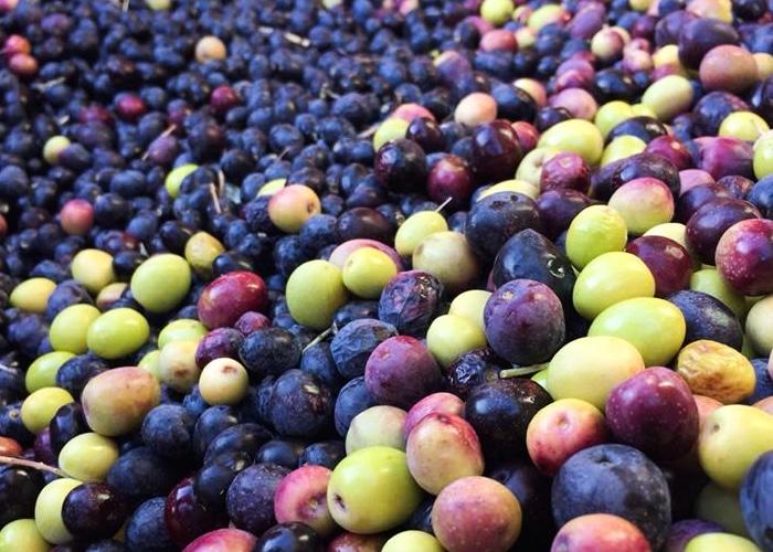 Vente d'huile d'olive près de Carpentras au Domaine du Colibri